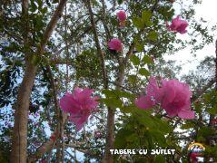 TabereCuSuflet.0285
