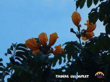TabereCuSuflet.0288
