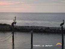 taberecusuflet-0500