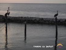 taberecusuflet-0501
