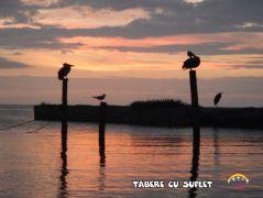 taberecusuflet-0503