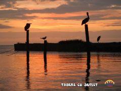 taberecusuflet-0504