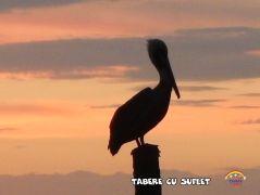 taberecusuflet-0505